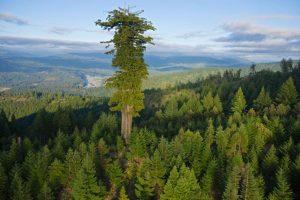 04-lone-tree-714